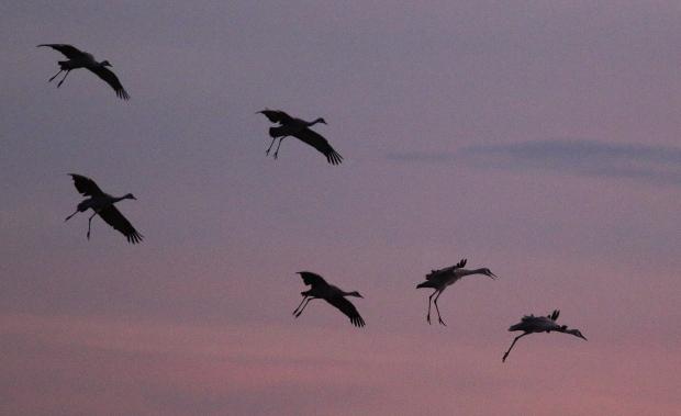 Isenberg Sunset Arrival39