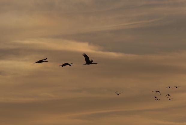 Isenberg Sunset Arrival44