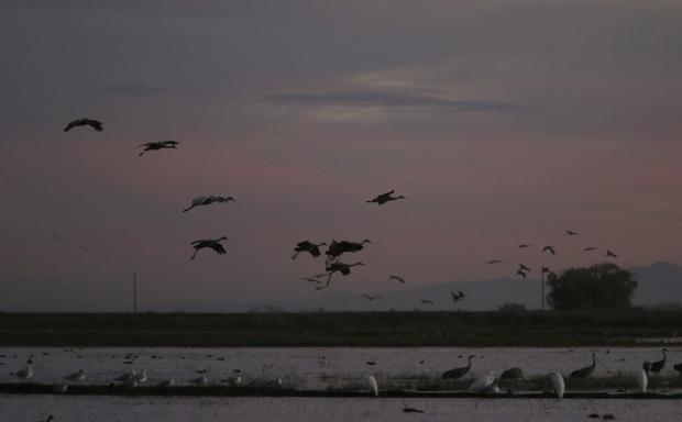 Isenberg Sunset Arrival46