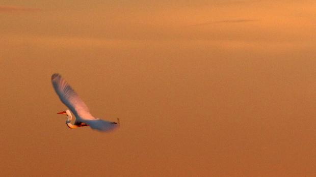 Isenberg Sunset Arrival58