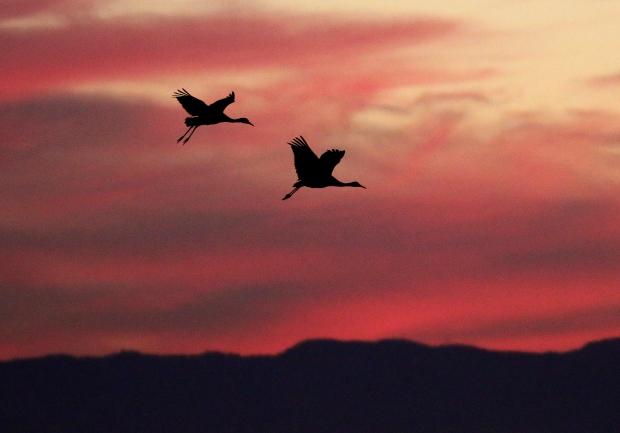 Isenberg Sunset Arrival59