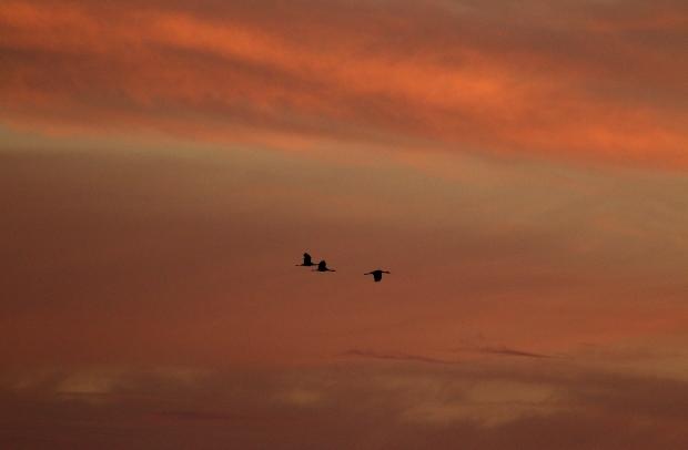 Isenberg Sunset Arrival8