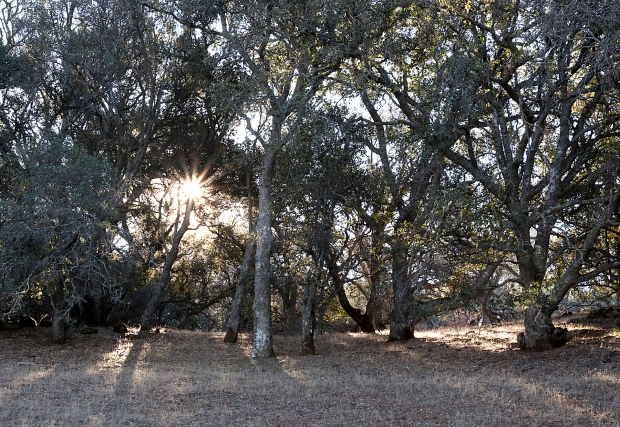 volvon:blue oak loop21