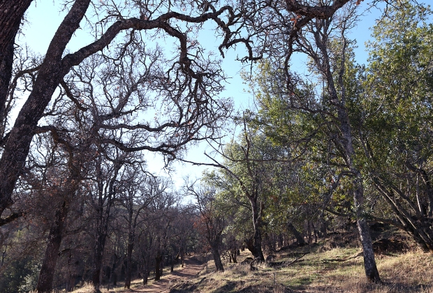volvon:blue oak loop27
