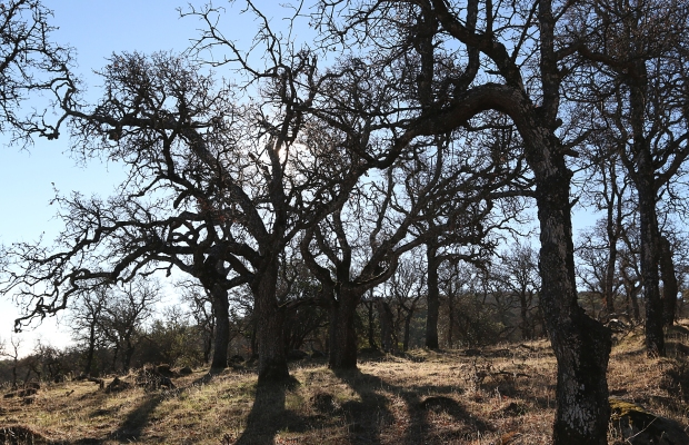 volvon:blue oak loop35