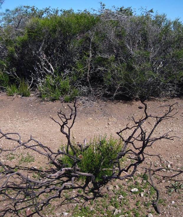 mount diablo summit hike19