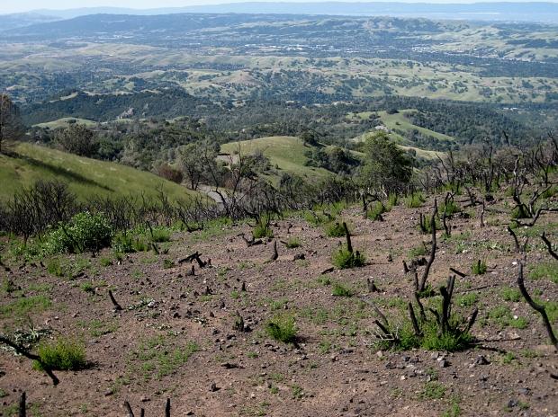 mount diablo summit hike21