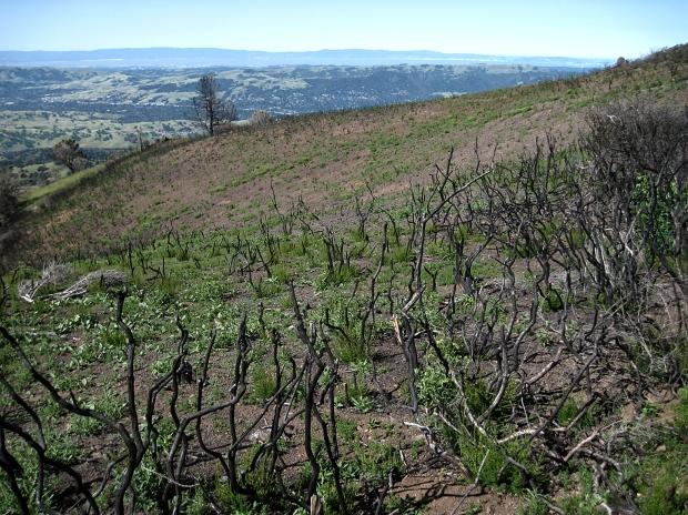 mount diablo summit hike22