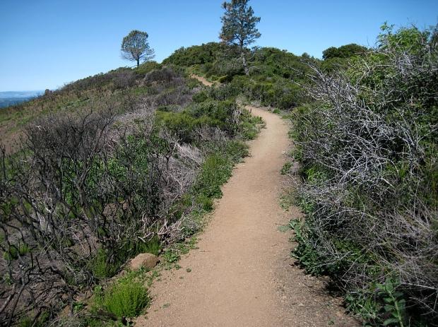 mount diablo summit hike23
