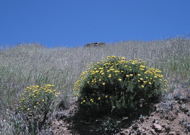 mount diablo summit hike30