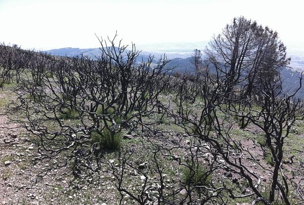 mount diablo summit hike35
