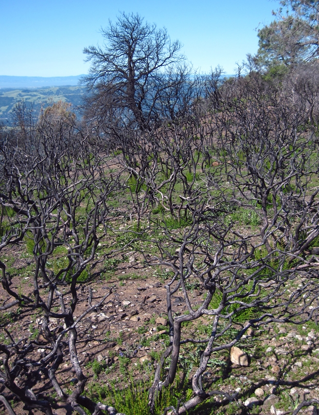 mount diablo summit hike4