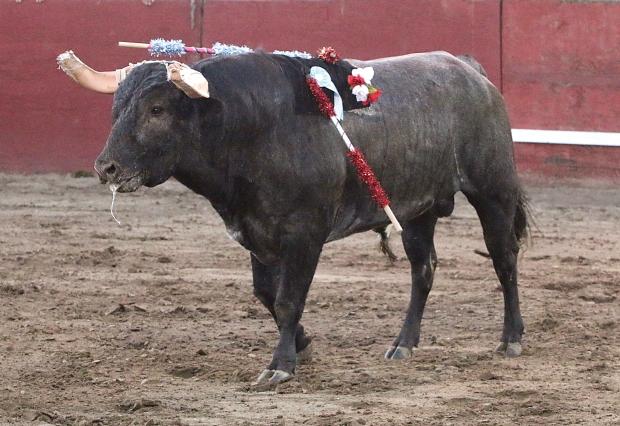 bloodless bullfights17  7-04-14