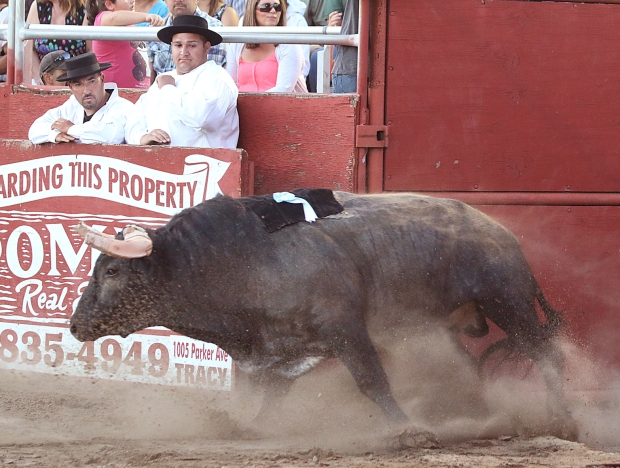 bloodless bullfights22