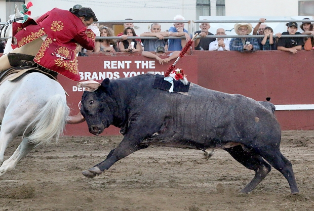 bloodless bullfights24