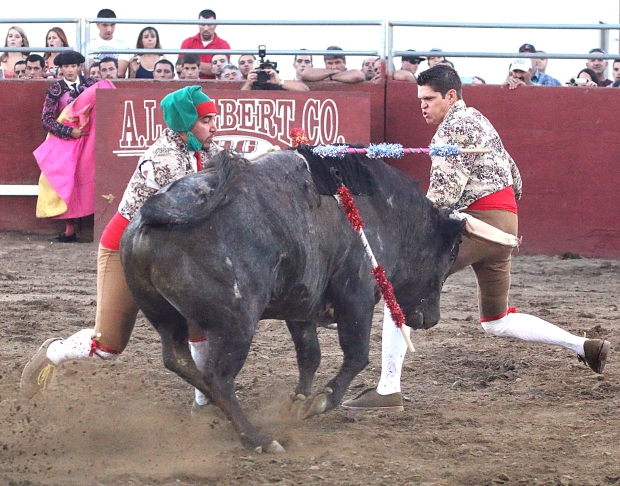 bloodless bullfights26