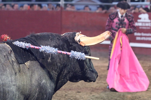 bloodless bullfights27