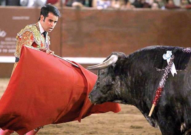 bloodless bullfights30