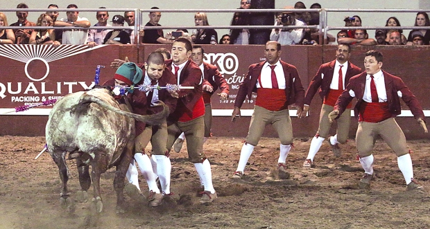 bloodless bullfights32