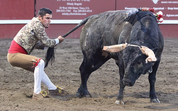 bloodless bullfights7  07-04-14