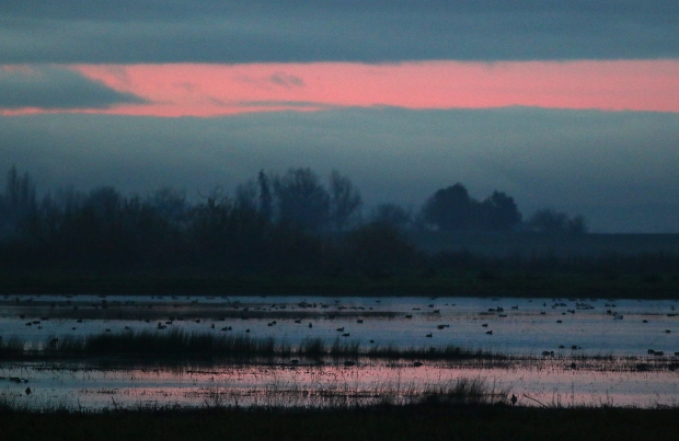 isenberg december sunrise2