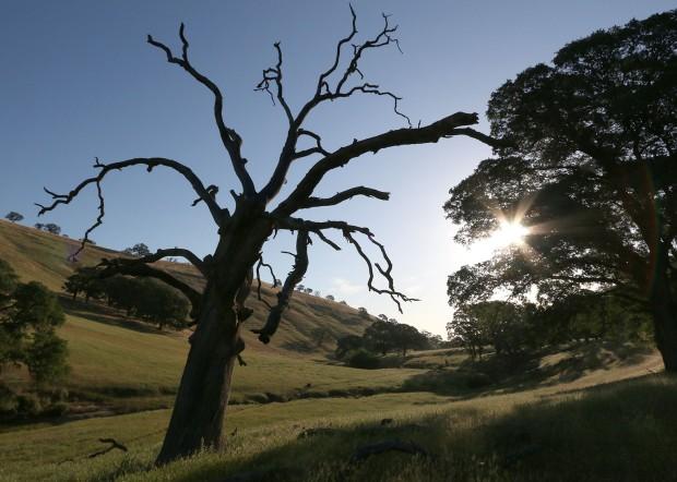 round valley murphey meadows loop10