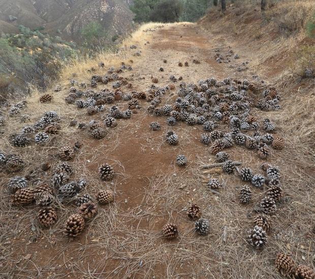 black point olofson ridge hike13