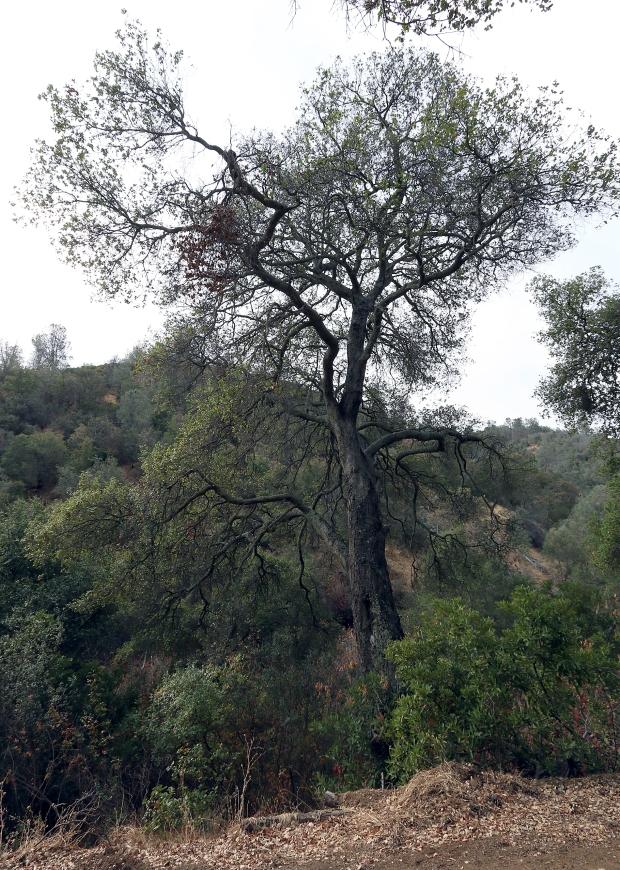 black point olofson ridge hike32