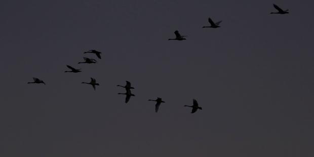 Isenberg Sunset26 November 2015
