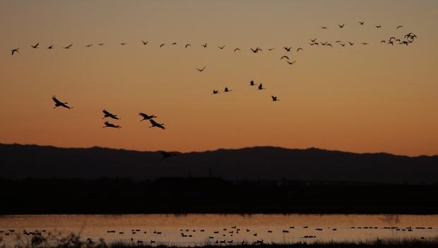 Isenberg Sunset37 November 2015