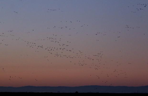 Isenberg Sunrise11 December 2105
