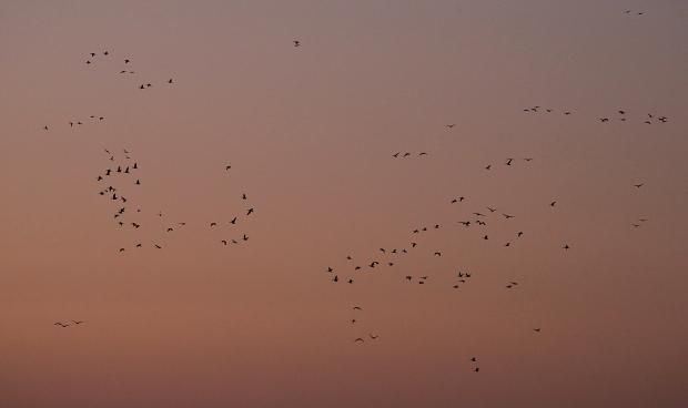 Isenberg Sunrise15 December 2105