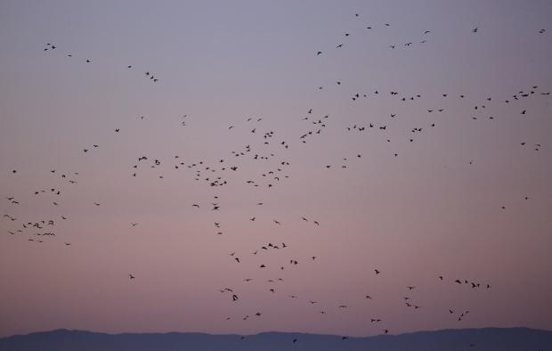 Isenberg Sunrise26 December 2105