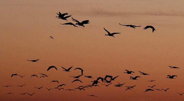 isenberg-november-sunset11