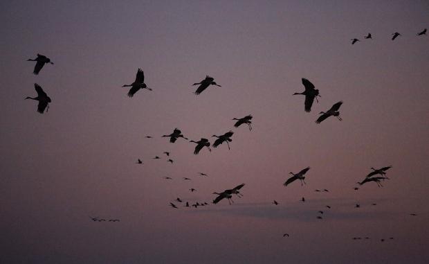 isenberg-november-sunset14