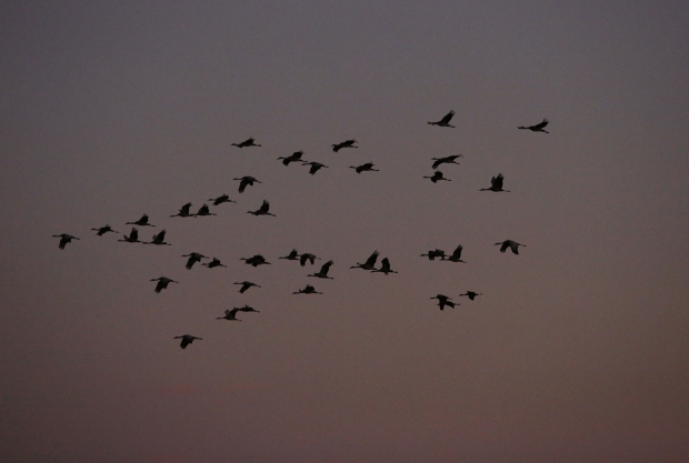 isenberg-november-sunset15