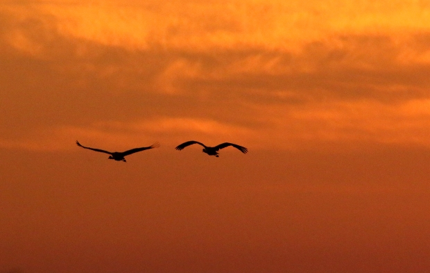 isenberg-november-sunset33