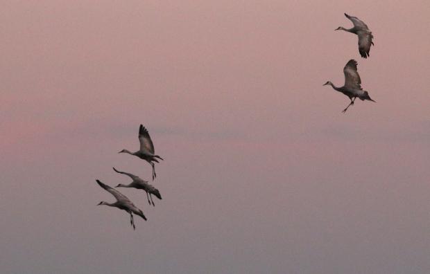 isenberg-november-sunset38