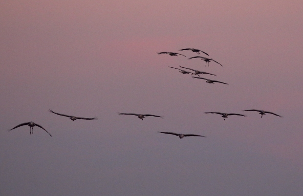 isenberg-november-sunset39