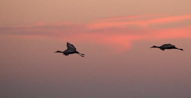 isenberg-november-sunset40