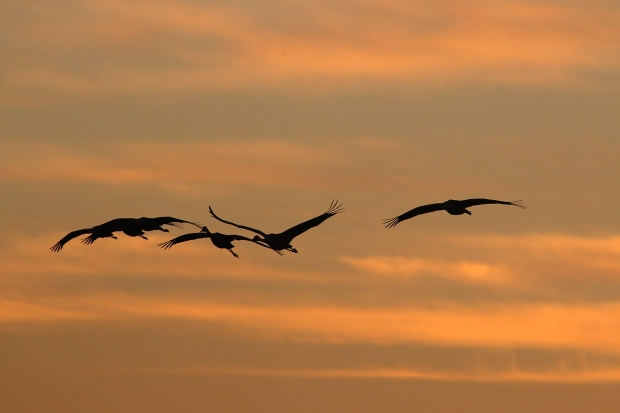 isenberg-november-sunset41