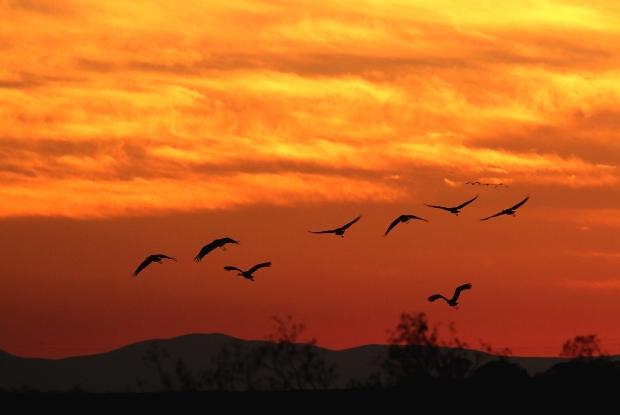 isenberg-november-sunset44
