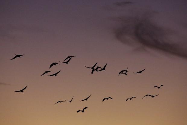 isenberg-november-sunset52