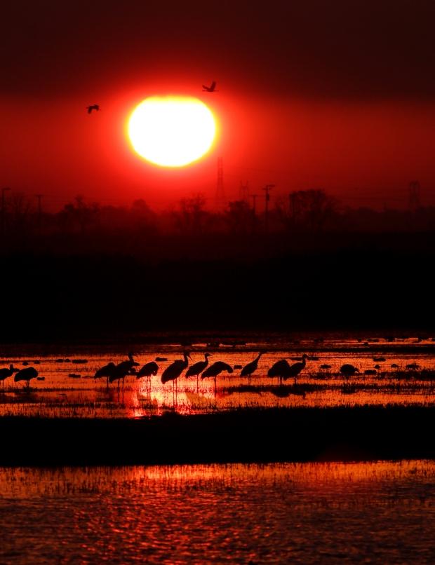 isenberg-sunrise1