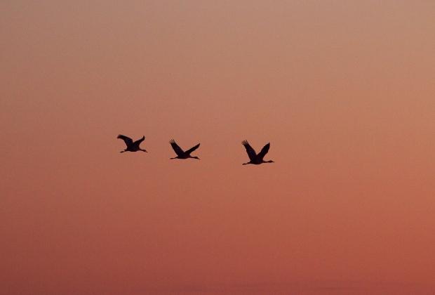 isenberg-sunset22