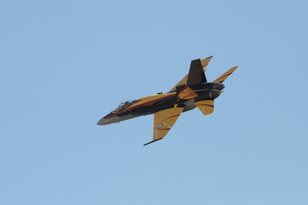 royal-candian-hornet-demo9