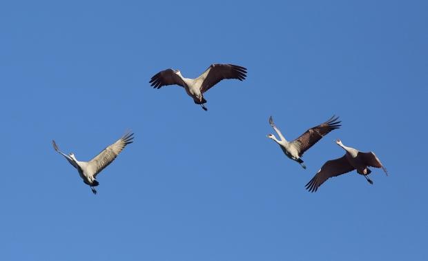 san-luis-merced-national-wildlife-refuge14
