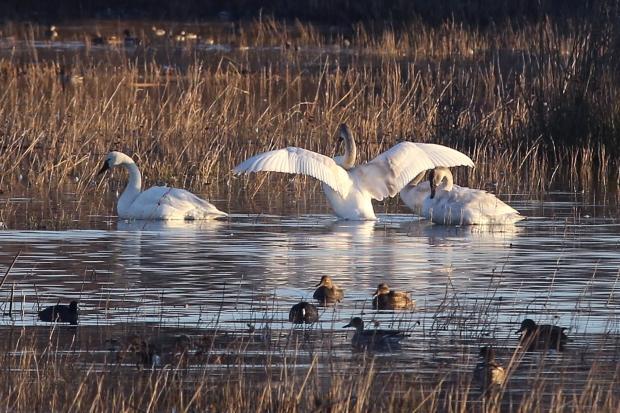 san-luis-merced-national-wildlife-refuge15