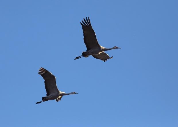 san-luis-merced-national-wildlife-refuge20