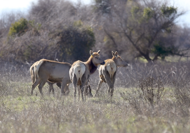 san-luis-merced-national-wildlife-refuge21